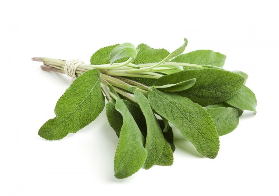 8 Tanaman Herbal Yang Cocok Sebagai Kebun Dapur